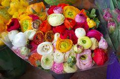 きれいな花束