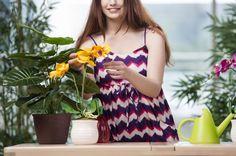 胡蝶蘭を育てている女性
