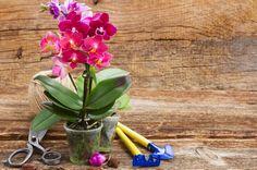 小さなピンクの胡蝶蘭の鉢植え