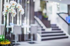移転後のオフィスに飾られた胡蝶蘭