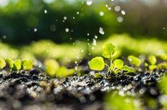 植物への水やりのイメージ
