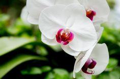 緑の中で咲く胡蝶蘭
