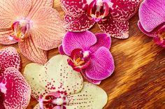 ピンクと黄色の大輪胡蝶蘭
