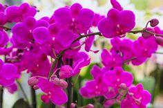 紫と白のミニ胡蝶蘭