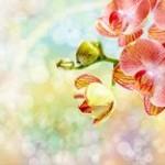 日の中で輝くきれいな胡蝶蘭