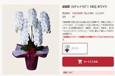 おトクな胡蝶蘭の通販サイトのページ