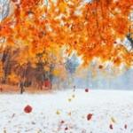 秋と越冬 イメージ