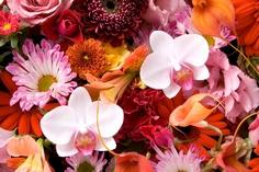 快気祝い 胡蝶蘭のアレンジメント