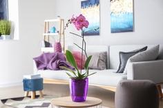 室内で育てられる胡蝶蘭