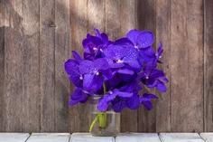 花瓶に挿した紫色の胡蝶蘭