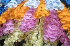 色別に意味も異なる胡蝶蘭