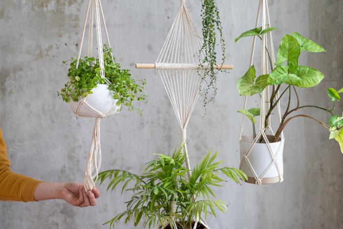 人気の観葉植物