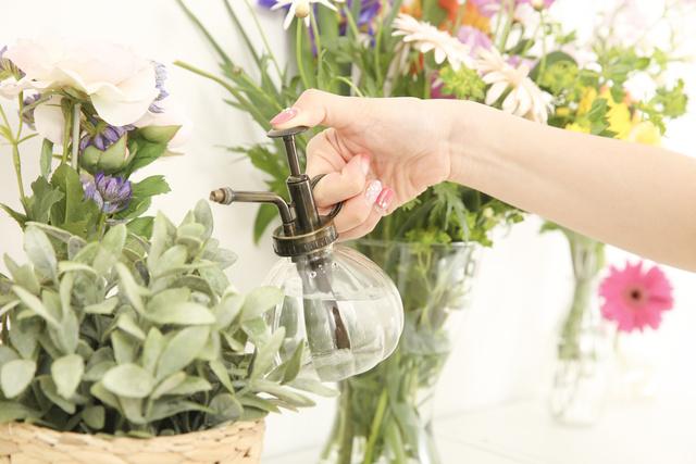 観葉植物に水をやる手元
